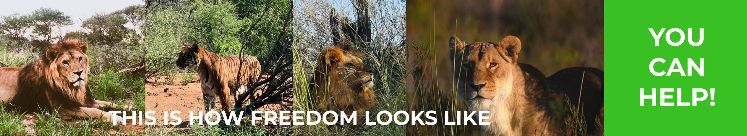 Wildlife Advocates Foundation - for freedom